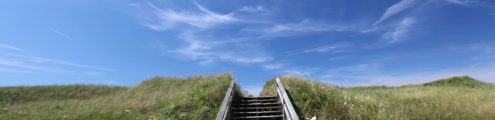 Steps leading into tall beach grass with clear blue skies in the background